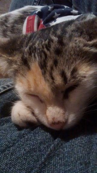 Smore sleeping in my lap