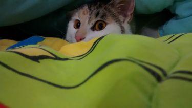 smore hiding under a blanket